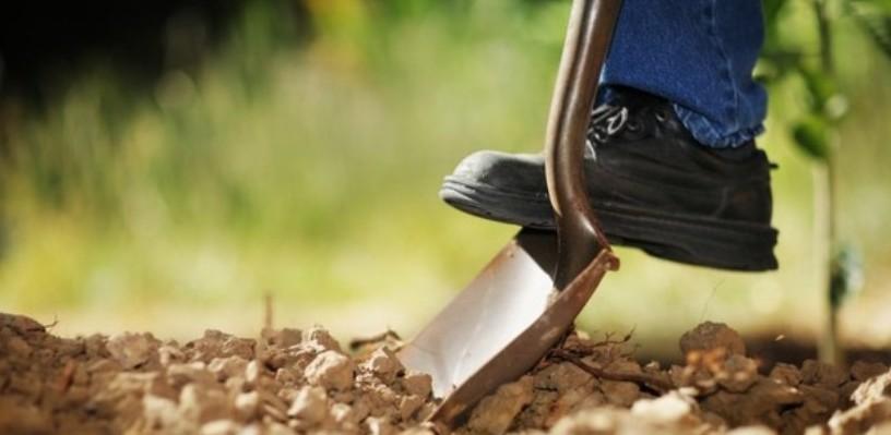 В Омске утвержден новый порядок сноса деревьев, обязывающий поливать саженцы