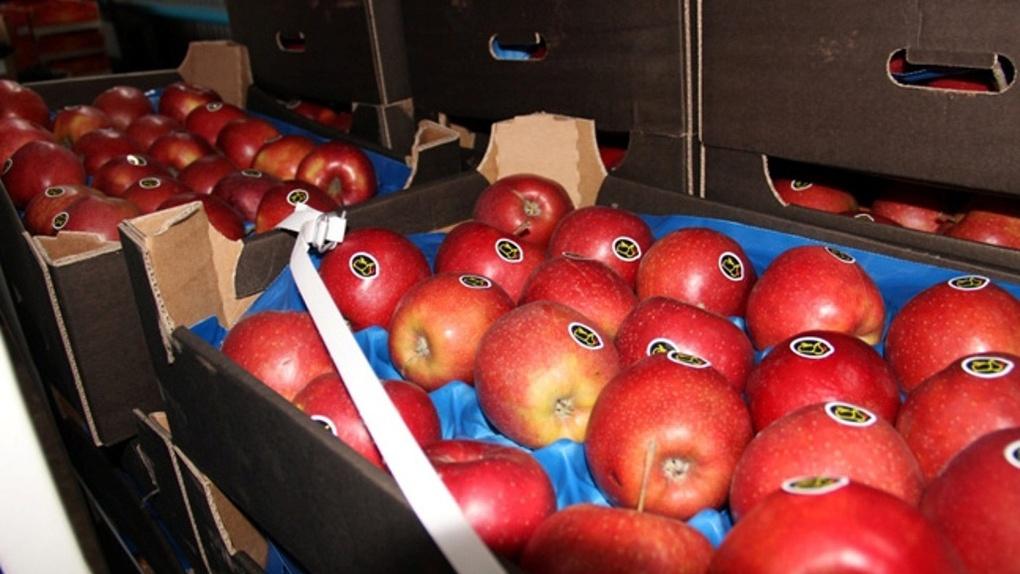 В Омской области уничтожили почти полторы тонны украинских яблок