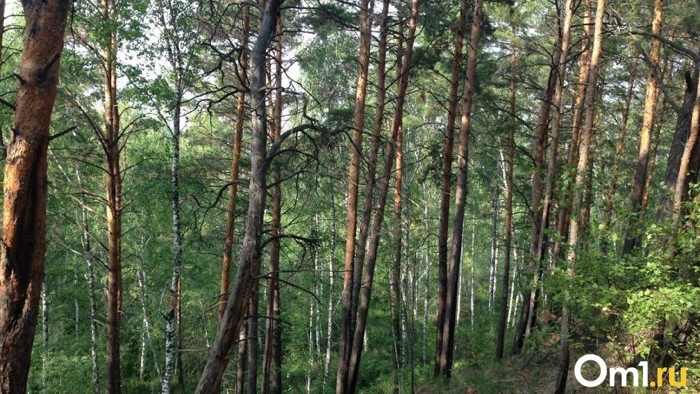 В омских лесах появятся яркие стрелки для тех, кто заблудился