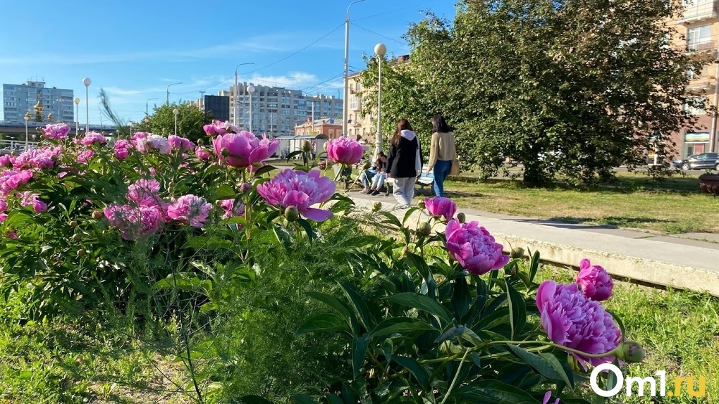 Аномальные выходные. Антициклон несёт в Омскую область жару до +34 °С