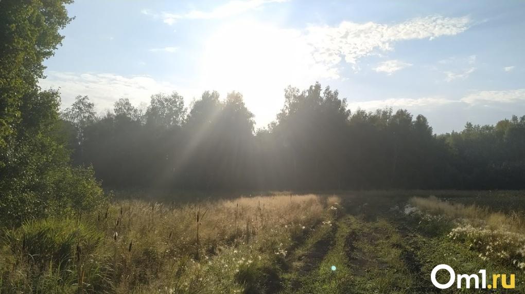 После штормового ветра в Омск вернётся бабье лето