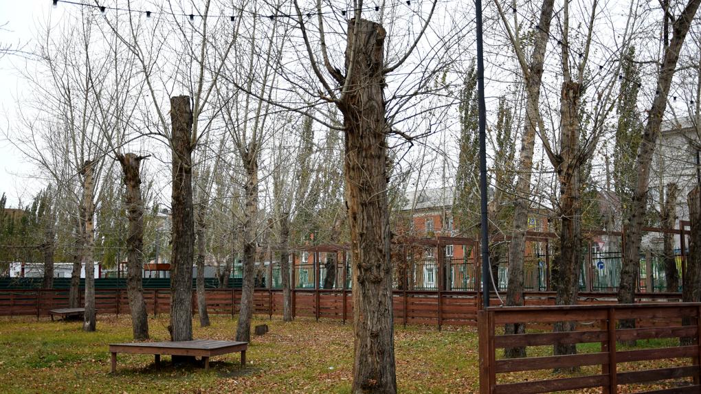 В омской мэрии признали, что кронирование убивает деревья