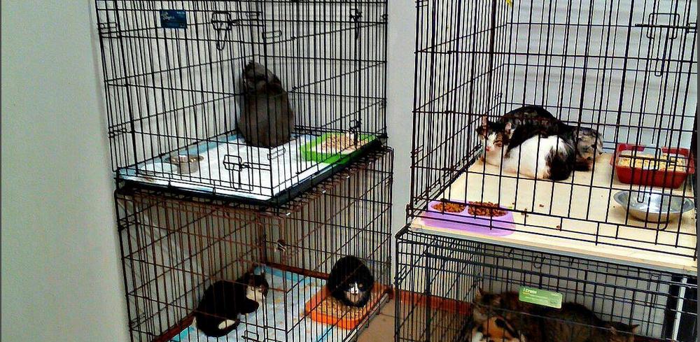 Омичи стоят первый дом для кошек