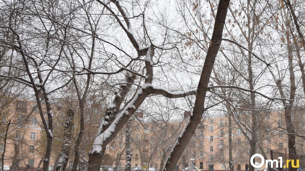 Власти объяснили причину ночного спиливания деревьев в центре Новосибирска