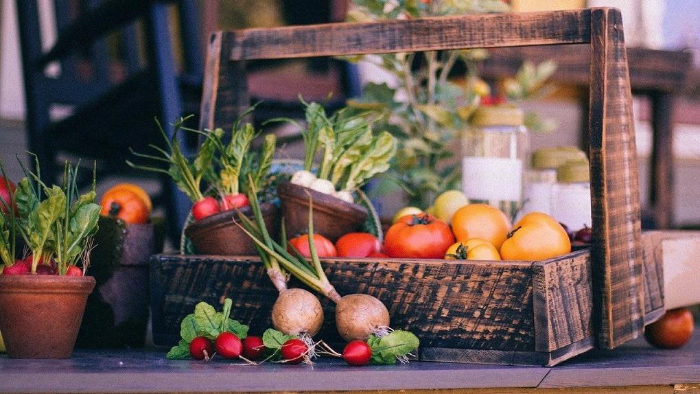 Ароматная зелень, сочная капуста: что лучше всего сажать в июне?