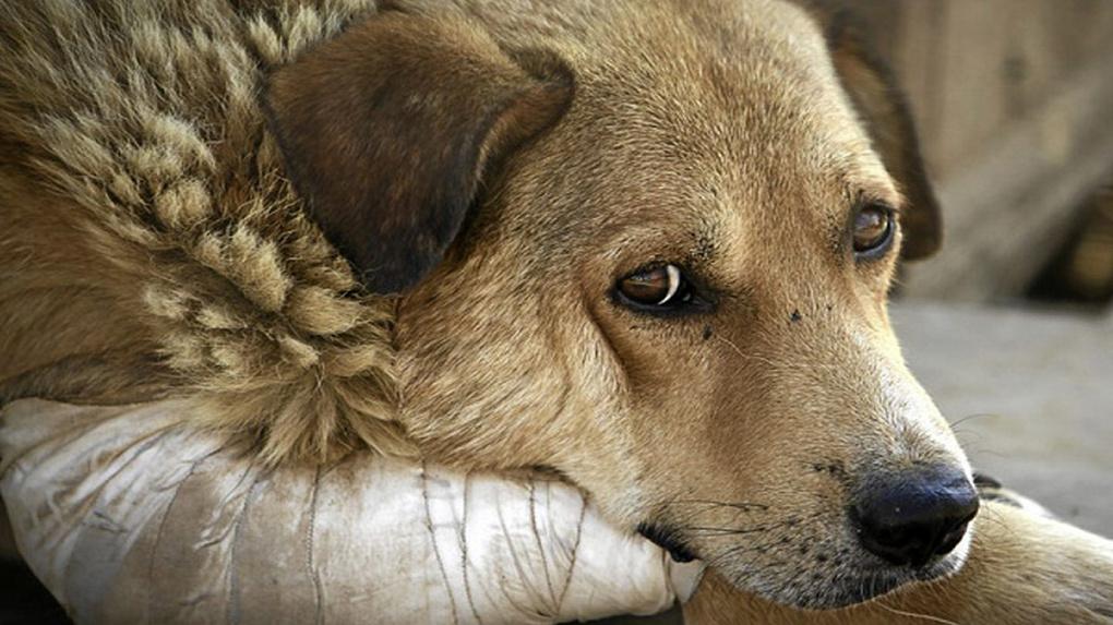 Новосибирцы попросили Путина пресечь убийства животных