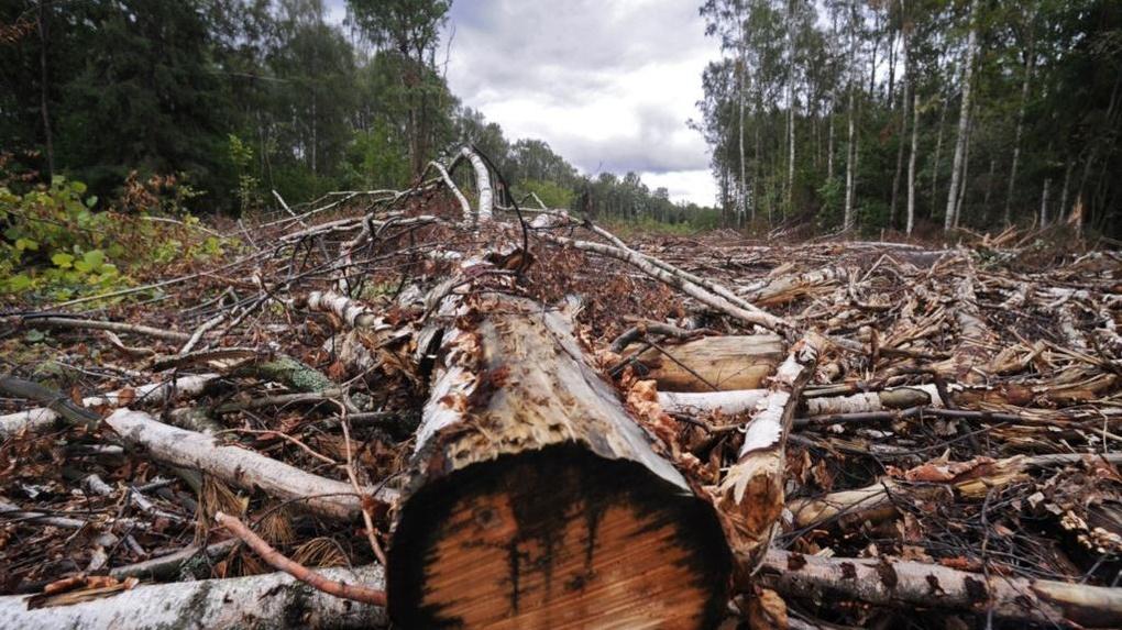 «Черные лесорубы» в Омской области могли нарубить деревьев на 4 млрд рублей