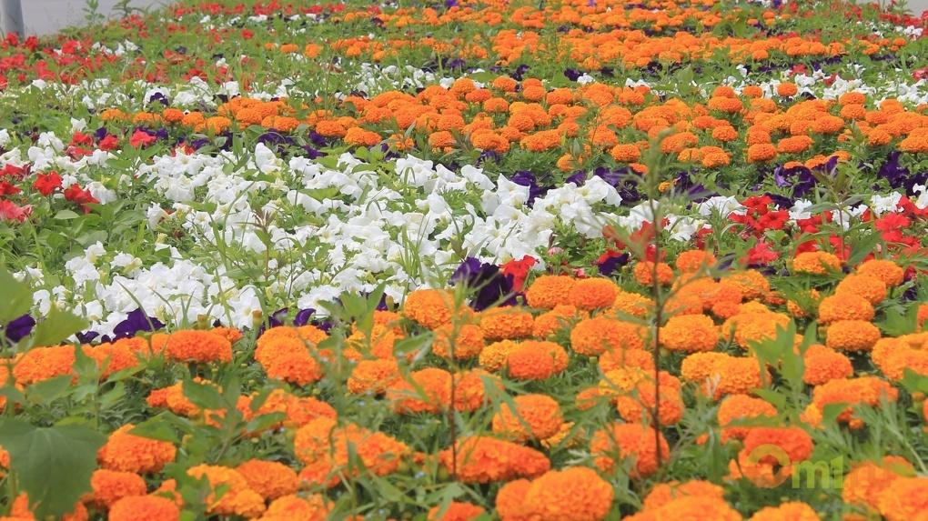 В омских парках и садах до конца недели посадят 84 000 цветов