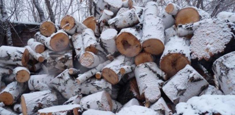В Омской области сельчане незаконно заготавливали дрова