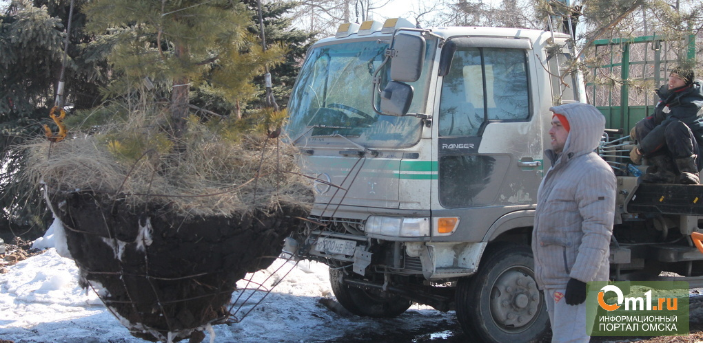 В Центральном округе Омска планируют высадить 4 тысячи саженцев