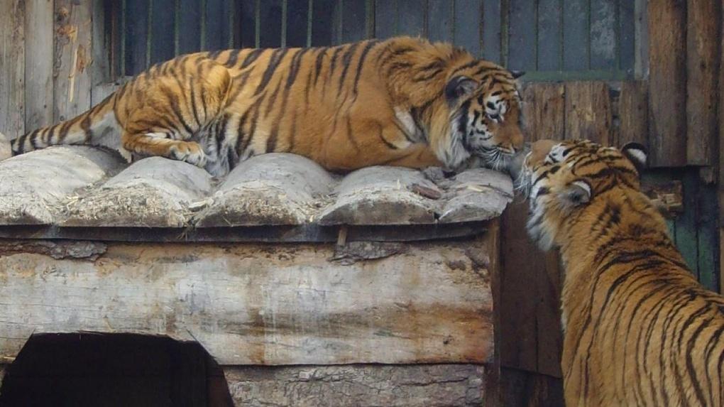В Омской области появился новый туристический маршрут в Большереченский зоопарк