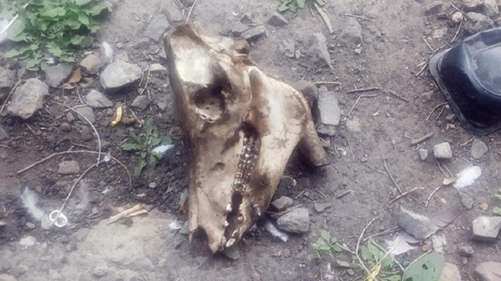 Новосибирцев возмутил череп животного во дворе дома