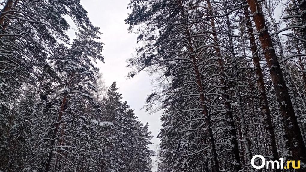 Сохранить Заельцовский бор: депутаты новосибирского парламента выступили против застройки зелёной зоны
