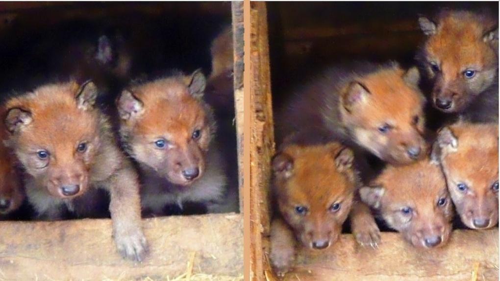 В Большереченском зоопарке произошло очередное пополнение
