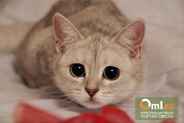 В Сибири начали сдавать кошек напрокат