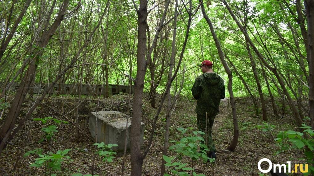В Новосибирске запретили охоту на лосей