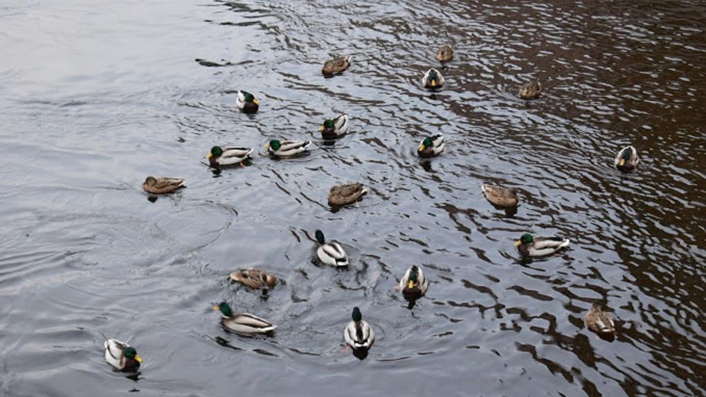 В связи с коронавирусом в Омске решили судьбу весеннего сезона охоты