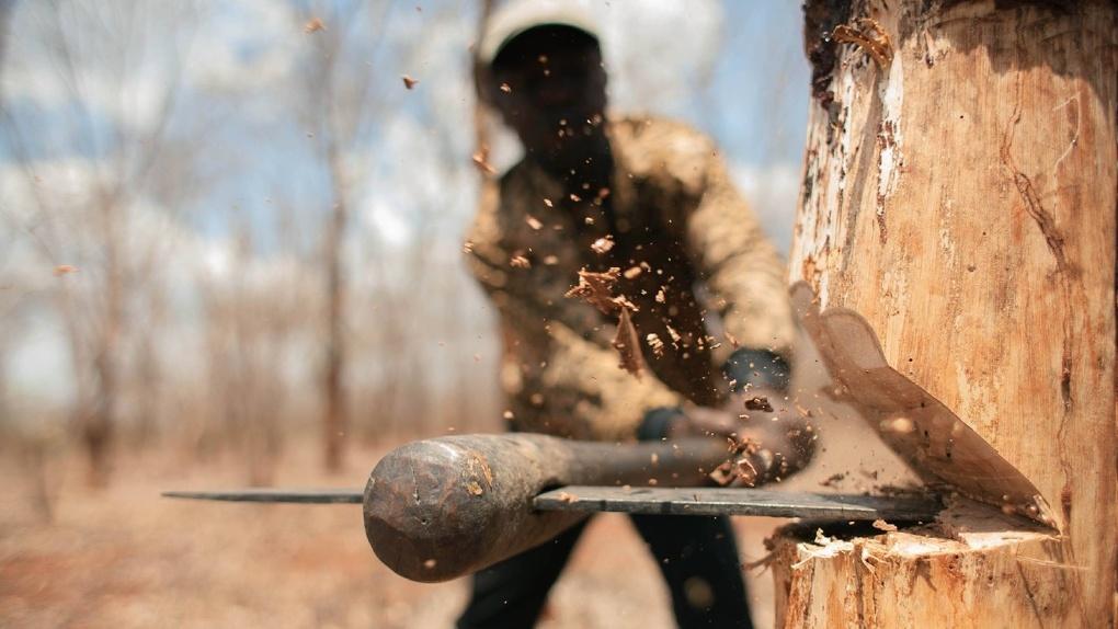 Федеральное МВД назвало новые суммы ущерба по делу о массовых вырубках в Омской области