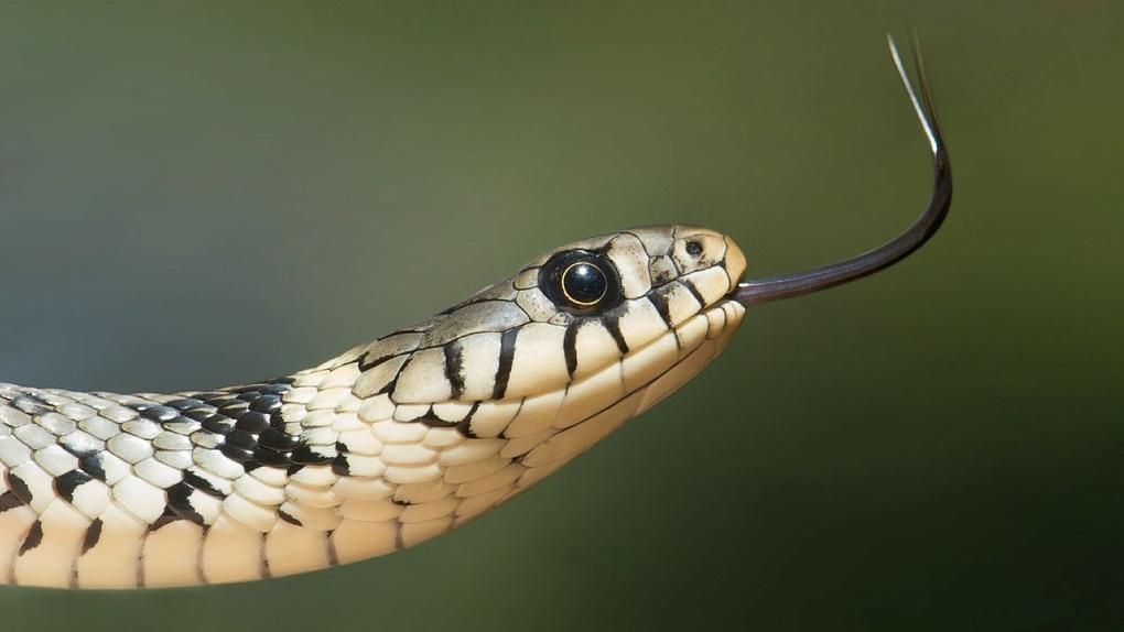Змея проникла в подъезд и напугала жителей многоэтажного дома в Новосибирске