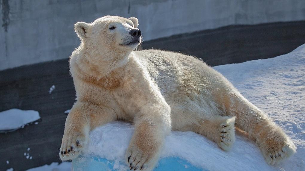 Новосибирцам предлагают следить за жизнью зверей зоопарка в онлайн-режиме
