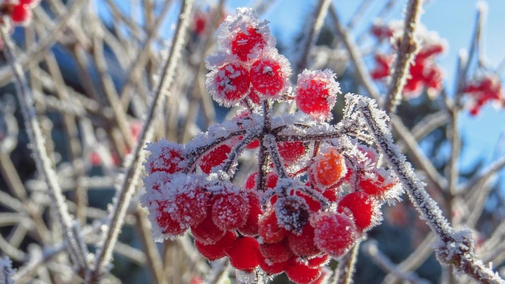 Осторожно, лёд! Заморозки до -2 ударят в Новосибирске на предстоящих выходных