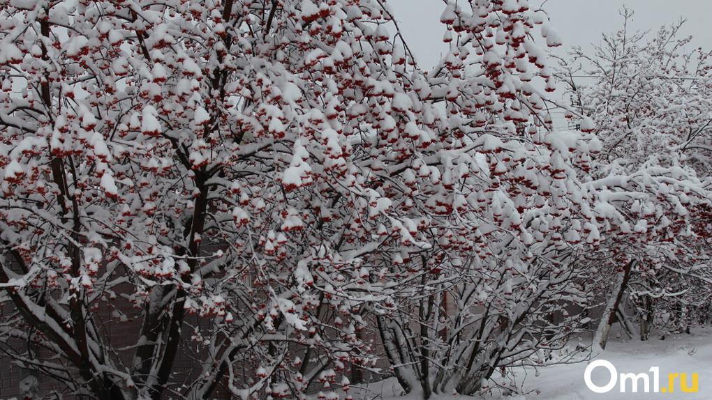 Время доставать валенки и тулупы: сильные морозы ударят в Новосибирске предстоящей зимой
