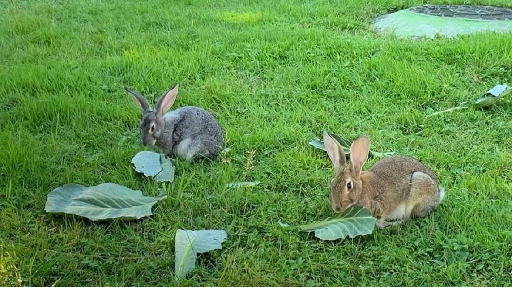 «А в кустах дед Мазай с ружьём»: кролики в парке Академгородка умилили новосибирцев