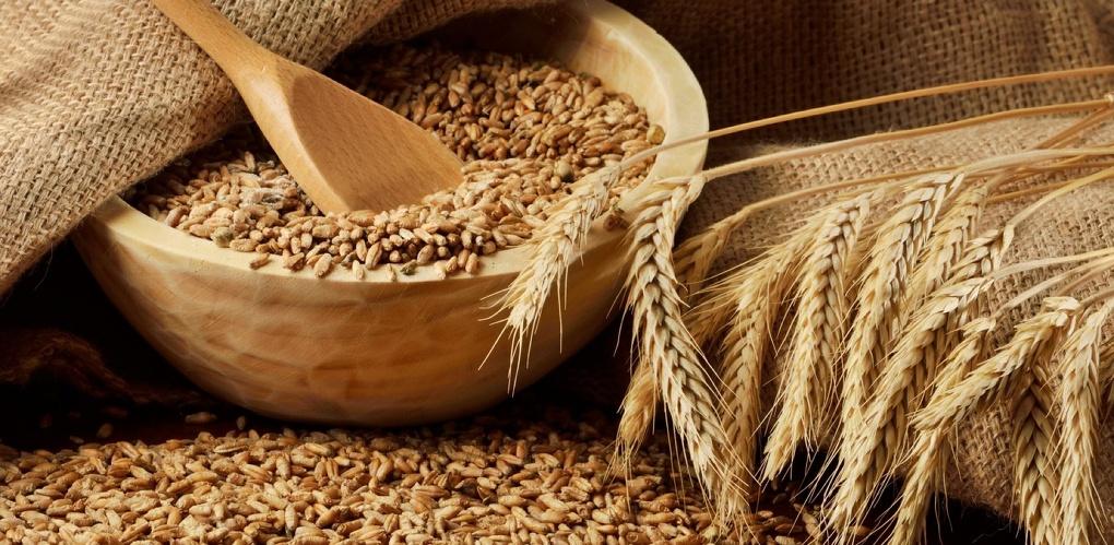 В Китай отправят 60 тысяч тонн пшеницы, собранной в Омской области