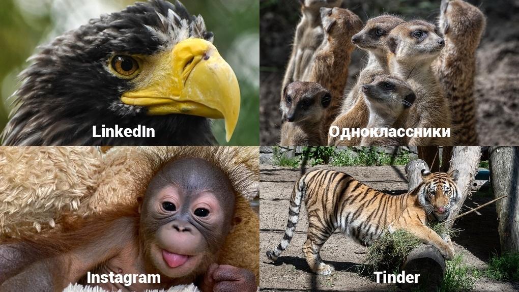 Обитатели Новосибирского зоопарка становятся звездами интернета