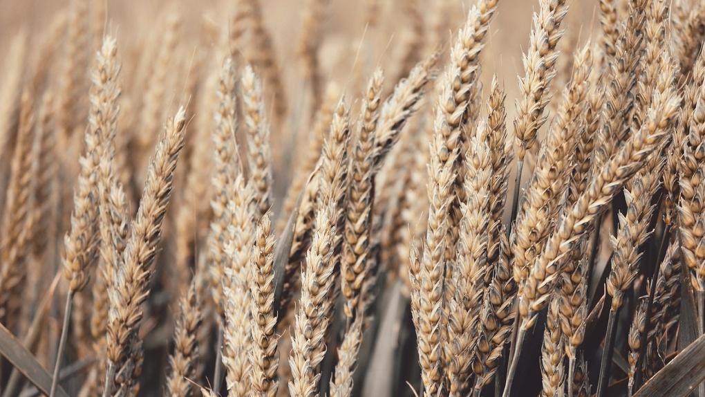 ФАС возбудила дело на Называевский элеватор за отказ хранить зерно