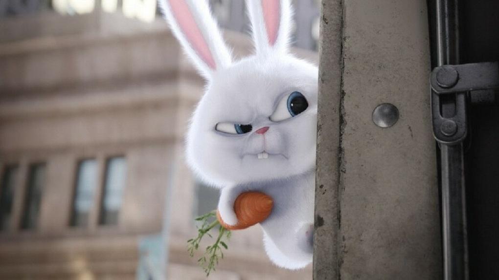 Вомских магазинах подешевели яйца, морковь икое-чтоеще