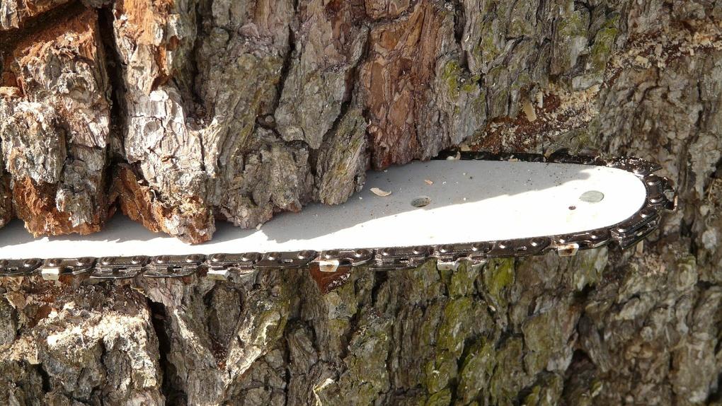 Омичу грозит штраф в 1 миллион или тюрьма до 4 лет за вырубку 8 деревьев