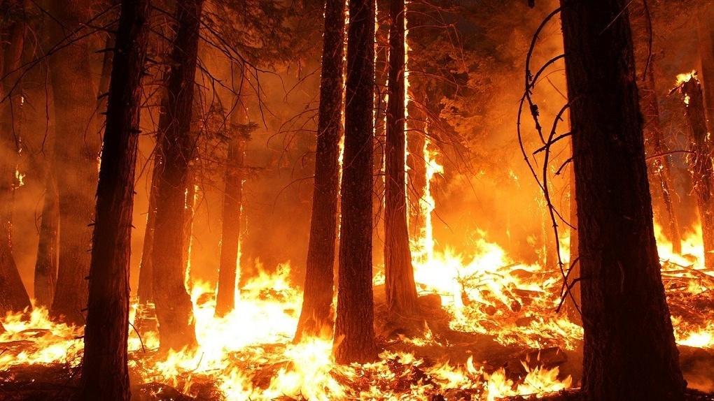 Появился список мест в Омской области, где могут вспыхнуть лесные пожары