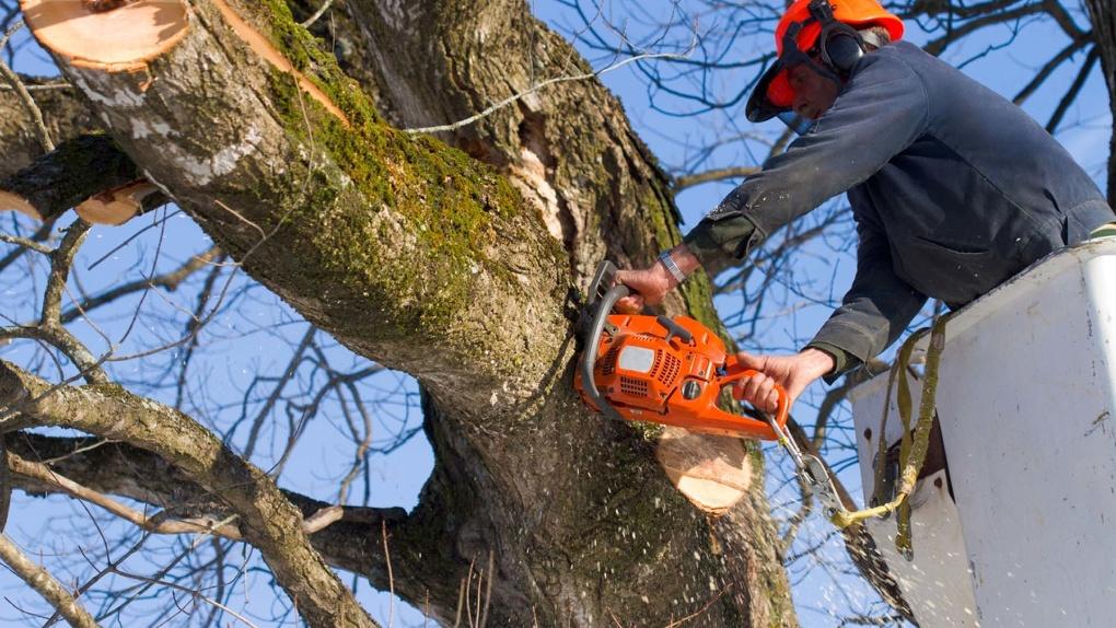 В Омске вырубку деревьев привязали к ремонту дорог