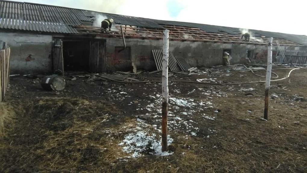 Около 50 животных погибли при пожаре на ферме в Новосибирской области