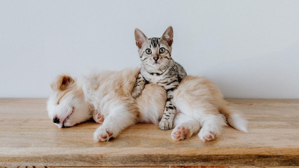 Последствие карантина: кошки и собаки резко подорожали в Новосибирской области