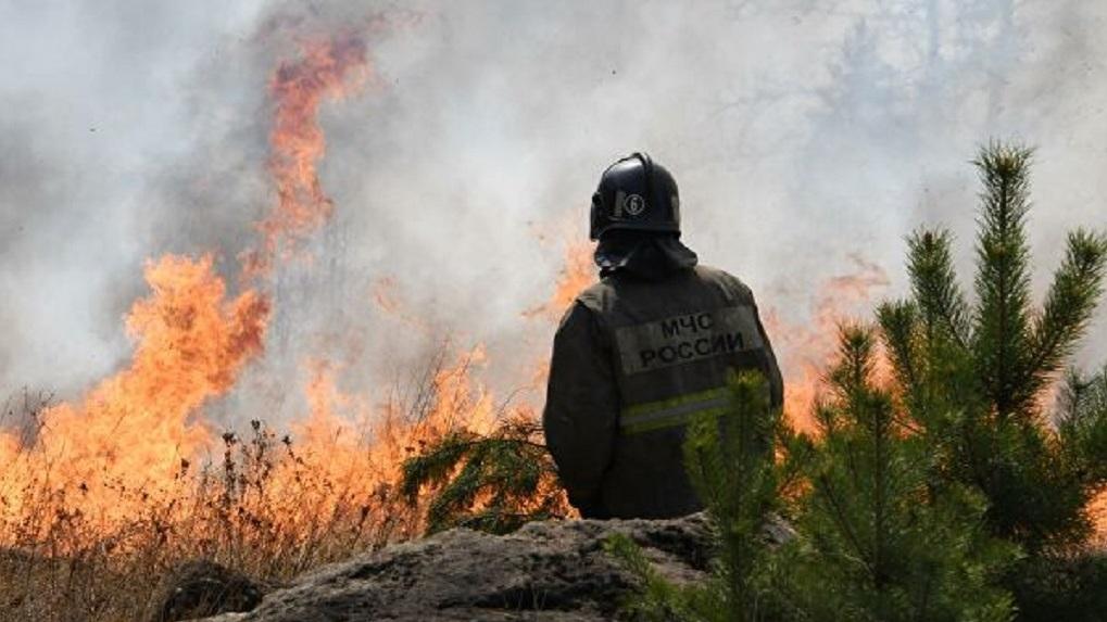 Ситуация SOS: новосибирцы задыхаются от природных пожаров (фото- и видеофакты)
