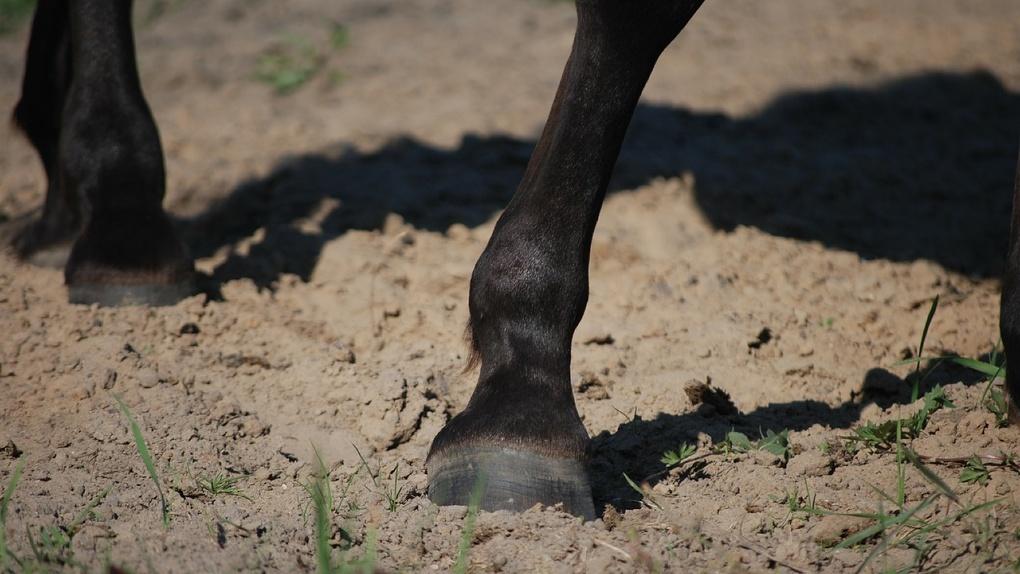 Школьника из Омской области лошадь ударила копытом прямо в голову